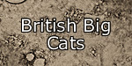 British Big Cats